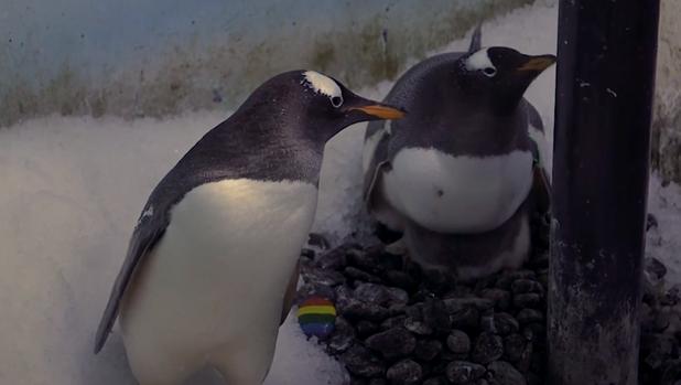 London Same Sex Penguin Couple