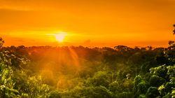 Por qué los bosques no son el pulmón del