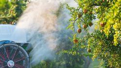 Cinq villes de gauche dont Paris interdisent les pesticides sur leur