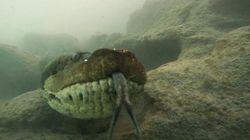 Il sub va in profondità e si ritrova davanti ad un'anaconda di 7 metri e mezzo