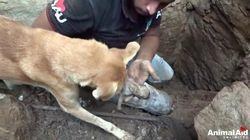 I cuccioli rimangono intrappolati sotto le macerie. La mamma scava per salvarli