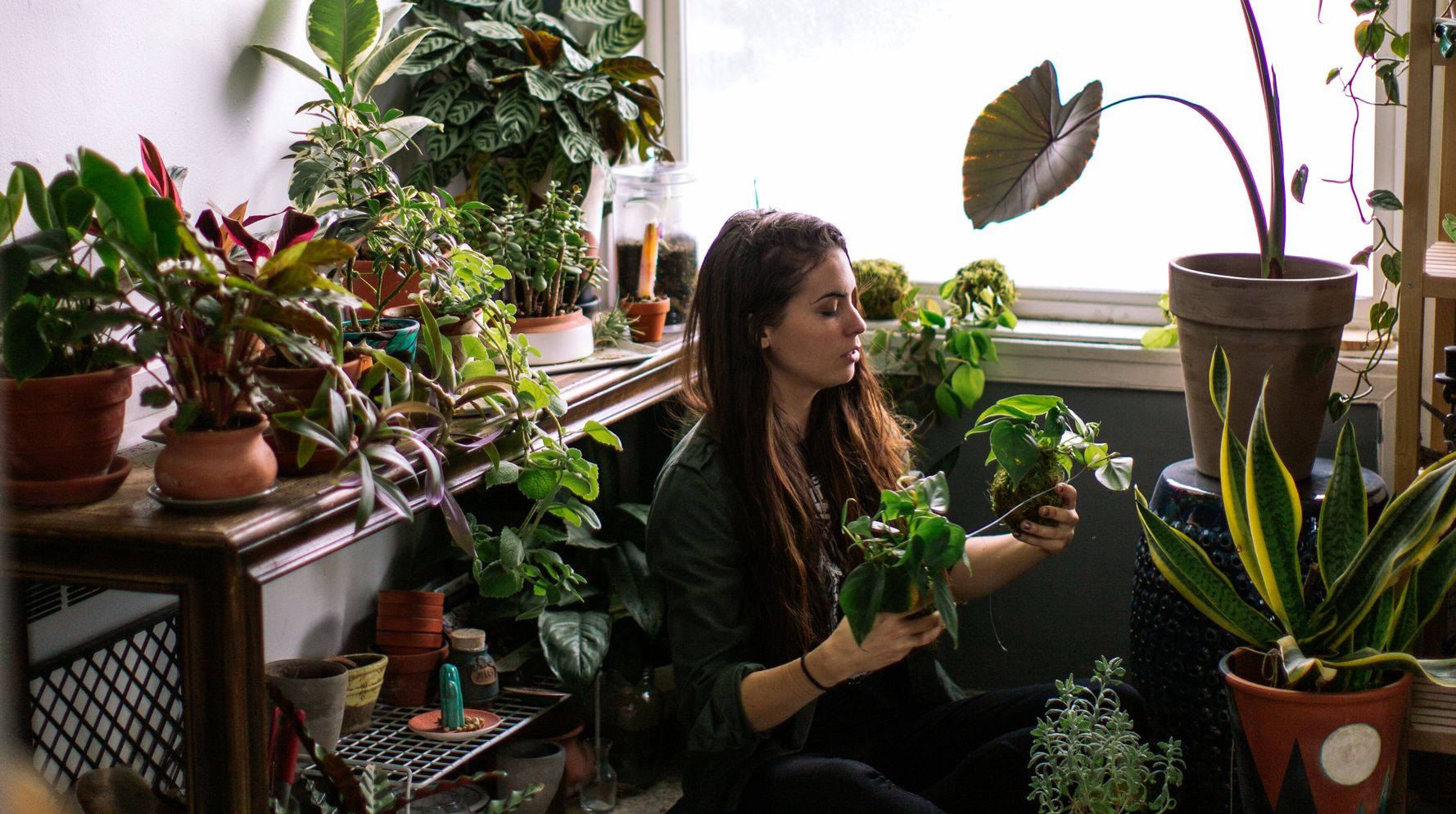 Why Millennials Are Suddenly So Obsessed With Houseplants | HuffPost Life
