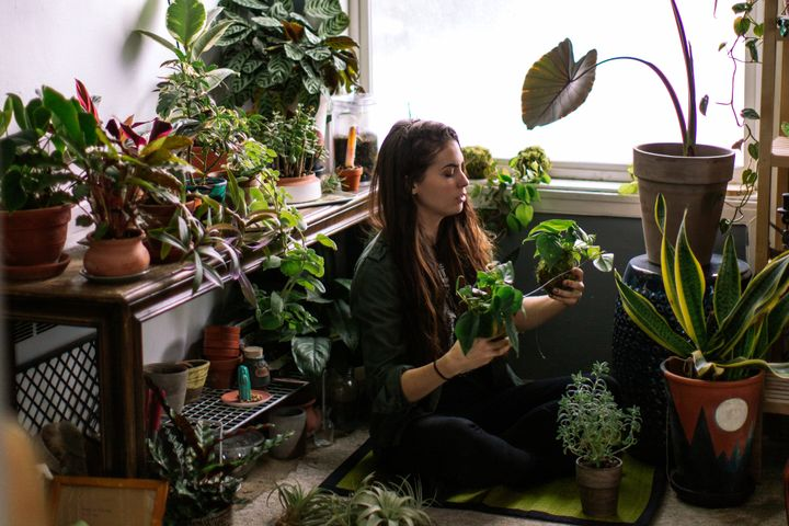 """There is something that is just completely awe-inspiring about having a living organism that you maybe get with one or two leaves ... and you give it a little bit of water, and it literally turns into something else in front of you,"" one plant-lover said."