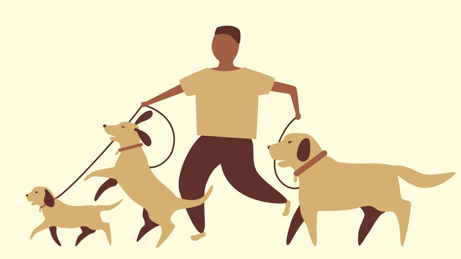 Cuántas veces al día tengo que sacar de paseo al perro | El HuffPost Life