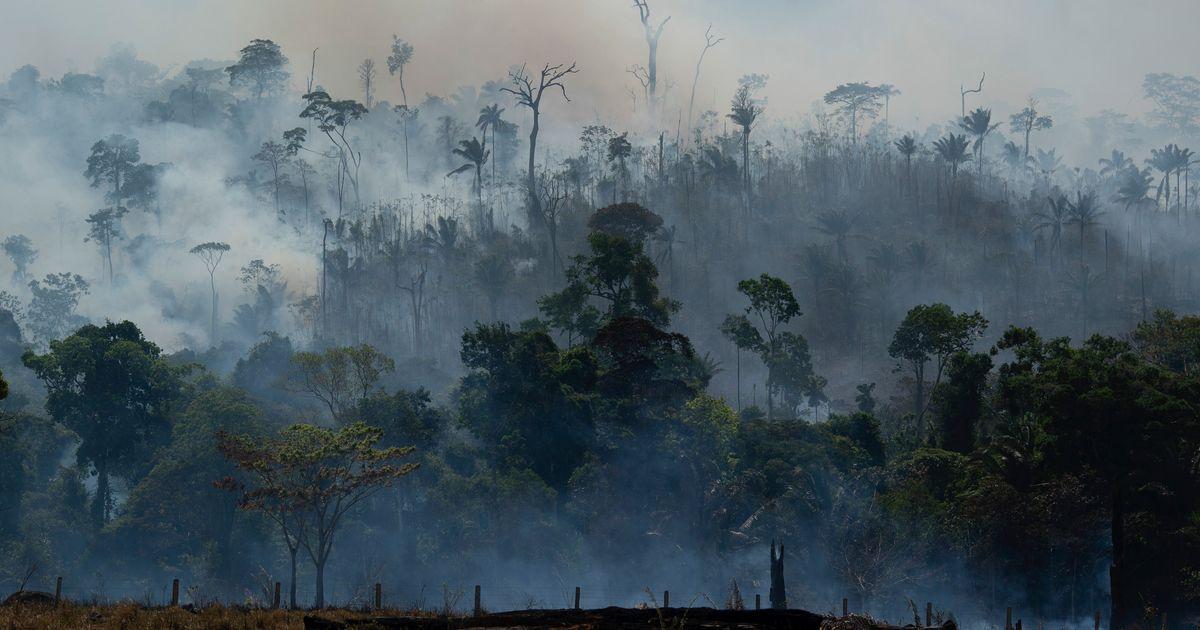 Sem Bolsonaro, governadores da Amazônia Legal articulam ajuda de estrangeiros