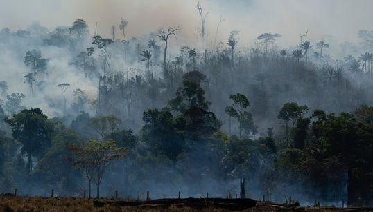O plano B dos governadores para salvar a Amazônia sem o governo