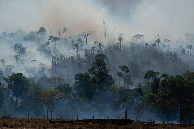 O desmatamento na Amazônia praticamente dobrou entre janeiro e agosto. Foram 6.404,4 km² destruídos...