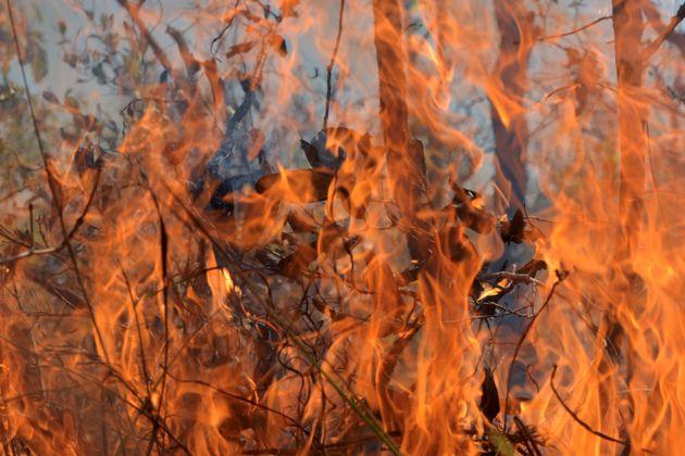 Corumbá (MS) é hoje a cidade com mais focos de queimadas, 3.180 ―597% a mais do que no...