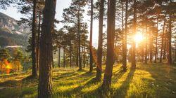 Le Danemark a organisé le premier téléthon du climat pour planter plus de 900.000