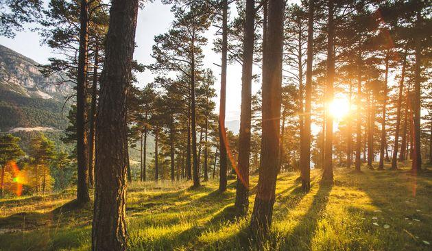 Le Danemark a organisé le premier téléthon en faveur du climat dans le but de planter...