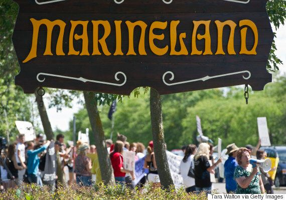 Marineland Charged With 5 Counts Of Animal Cruelty By