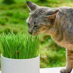 La verdad sobre gatos y perros: ¿por qué comen hierba nuestras peludas