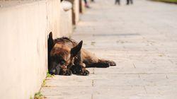 Καταγγελία για μαζική δηλητηρίαση σκύλων στη