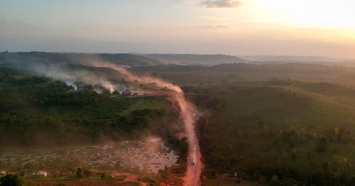 Desmatamento, assassinatos e sabotagem do governo: ONG denuncia impunidade na Amazônia 'sem lei'