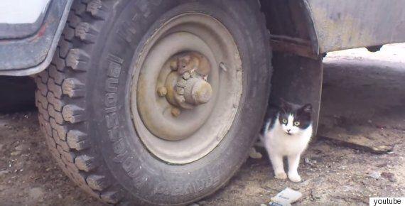 쥐는 지금 고양이를 피해 몸을