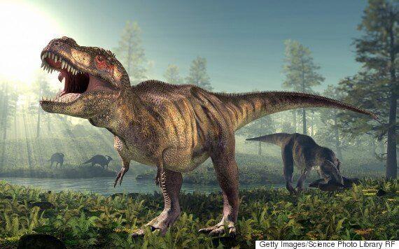 티라노사우루스들이 서로 잡아먹었다는 증거를 보여주는 공룡 뼈가