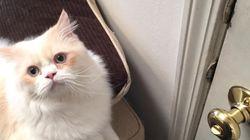 당신의 출근을 힘들게 만드는 고양이의 3단계