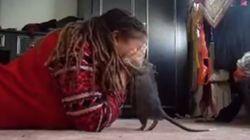 쥐를 반려동물로 키우는