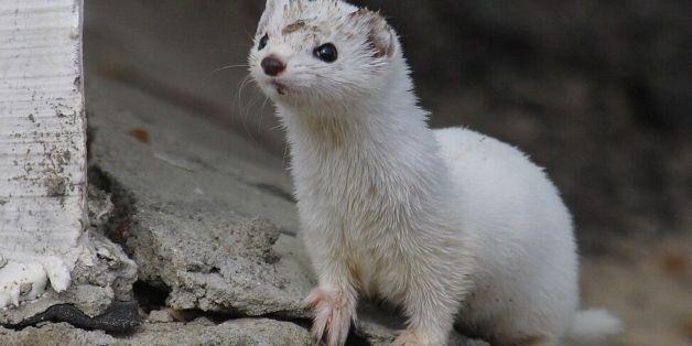 체르노빌 원전 사고로부터 수십 년, 출입금지구역에 야생 동물이 번성하고