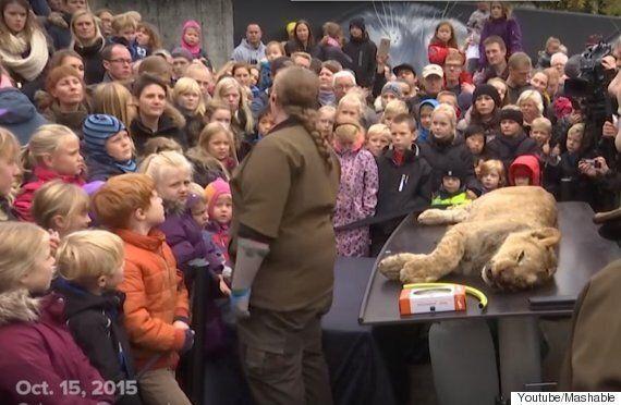 덴마크의 동물원이 아이들 앞에서 사자를