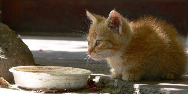 캣맘과 캣대디들을 위한 '길고양이 지침'