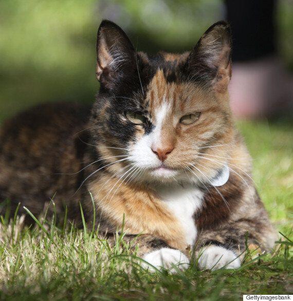 털 색깔에 따라 고양이의 성깔이