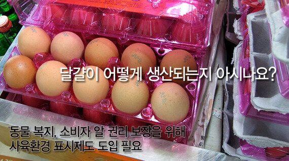 달걀이 어떻게 생산되는지