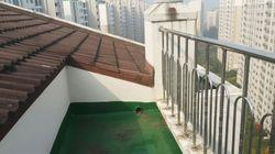 '캣맘 사건'이 일어난 옥상에 올라가 봤다(사진