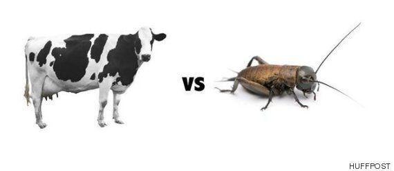 스테이크보다 벌레를 먹는 게 몸에 더