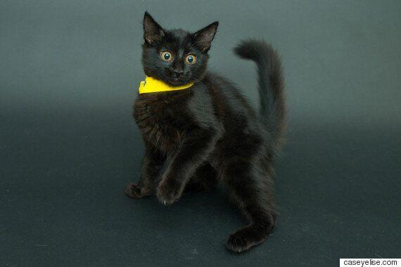 검은 고양이의 사랑스러운 매력을 포착한 사진작가(사진