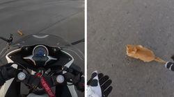 교차로에 떨어진 새끼 고양이를 구한