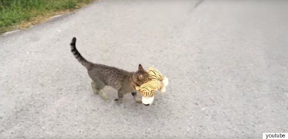 친구가 필요했던 고양이는 이웃집 호랑이 인형을