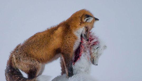 자연사 박물관이 선정한 '올해의 야생사진'