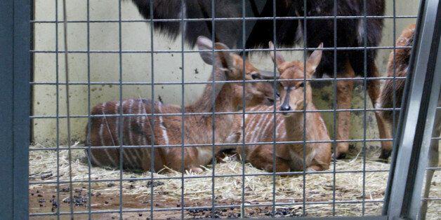 도축 위기에 놓였던 서울대공원 동물들을 구할 수 있게