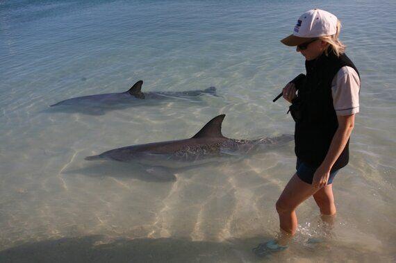 비인간인격체 여행 #1 | 돌고래는 왜