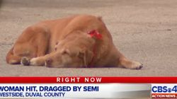 이 개는 주인이 죽은 도로에서 떠나기를