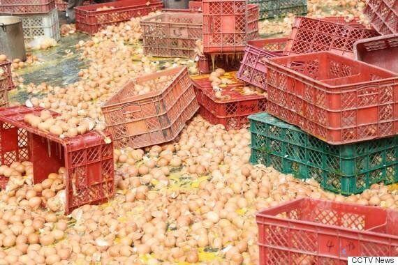 엄청난 양의 달걀이 도로에