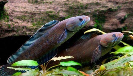 들창코원숭이와 걷는 물고기, 히말라야에서 발견된 신종 동식물을