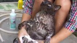 목욕을 받아들이기로 한 고양이의