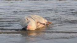 바다를 만난 돼지는 어떤 반응을