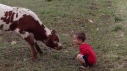 호기심 많은 소가 아이와 눈을