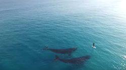 남방긴수염고래와 서퍼의 우연한