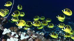 바다생물과의 소개팅, 누가 제일 맘에