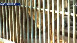 열악한 동물원에 갇힌 동물들이 미쳐가고