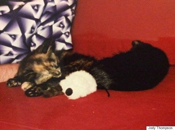 내 고양이가 죽었다. 가슴이