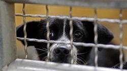 왜 PETA는 보호 중인 동물들을 많이 죽이는 이유에 대한 기본적 질문들에 대답하지