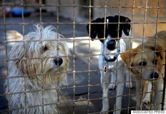 PETA(페타)는 보호 중인 동물들을 많이 죽이는 이유에 대한 기본적인 질문들에 대답하지 않고