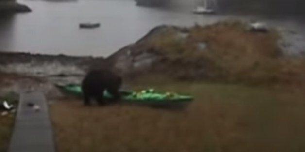 곰과 이성적 대화를 시도한