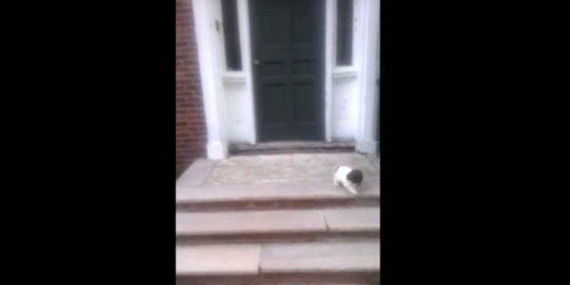 계단이 두려운 강아지가 선택한 천재적인