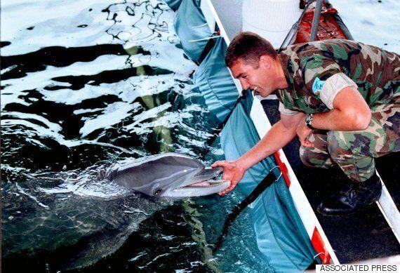 미 해군은 돌고래를 기뢰제거에